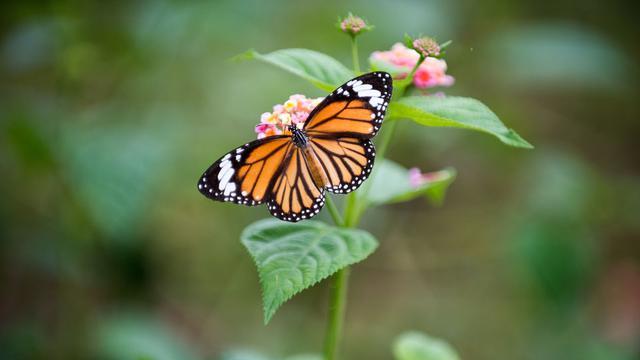 Habitat kupu-kupu