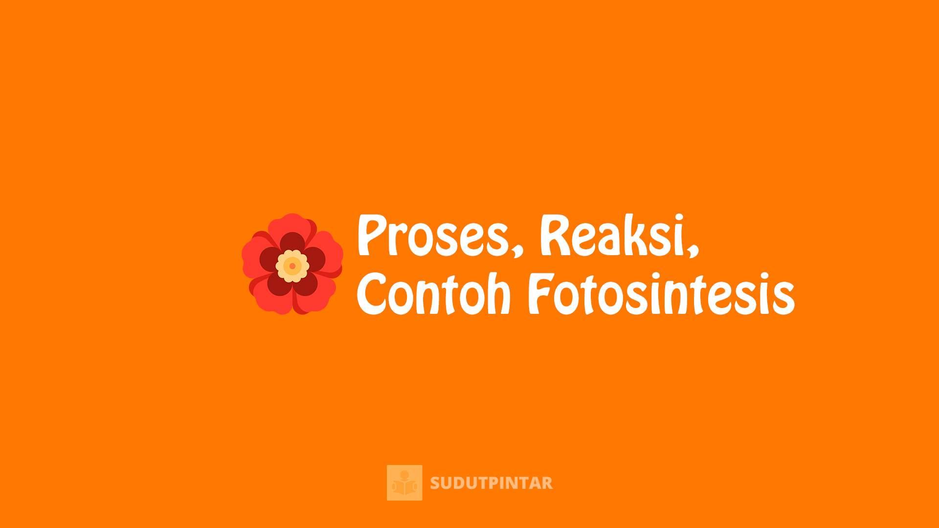 Proses, Reaksi, dan Contoh Fotosintesis